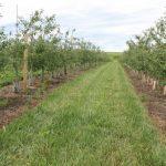 10. Johnson Buffalo Ridge FD orchard 727x485