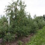 12. Johnson Buffalo Ridge FD maure trees 99 727x485