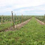 9. Johnson Buffalo Ridge FD new trees 727x485