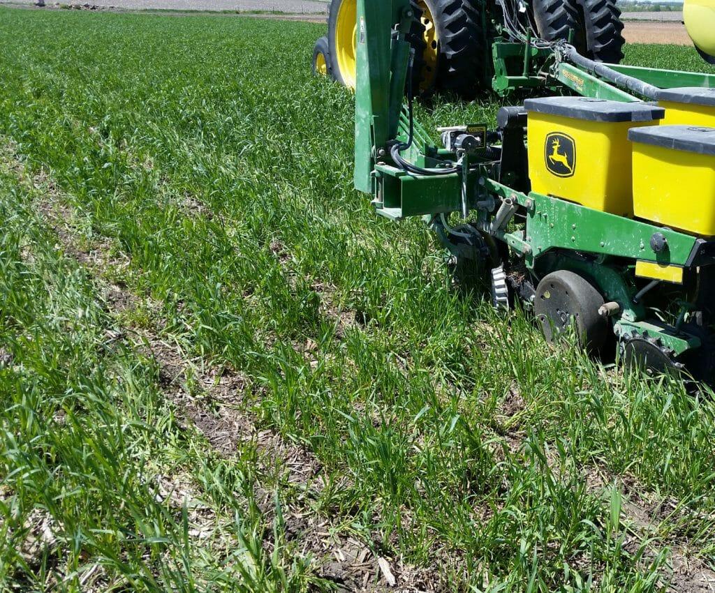 CC Term Ahead of Corn Photo 1