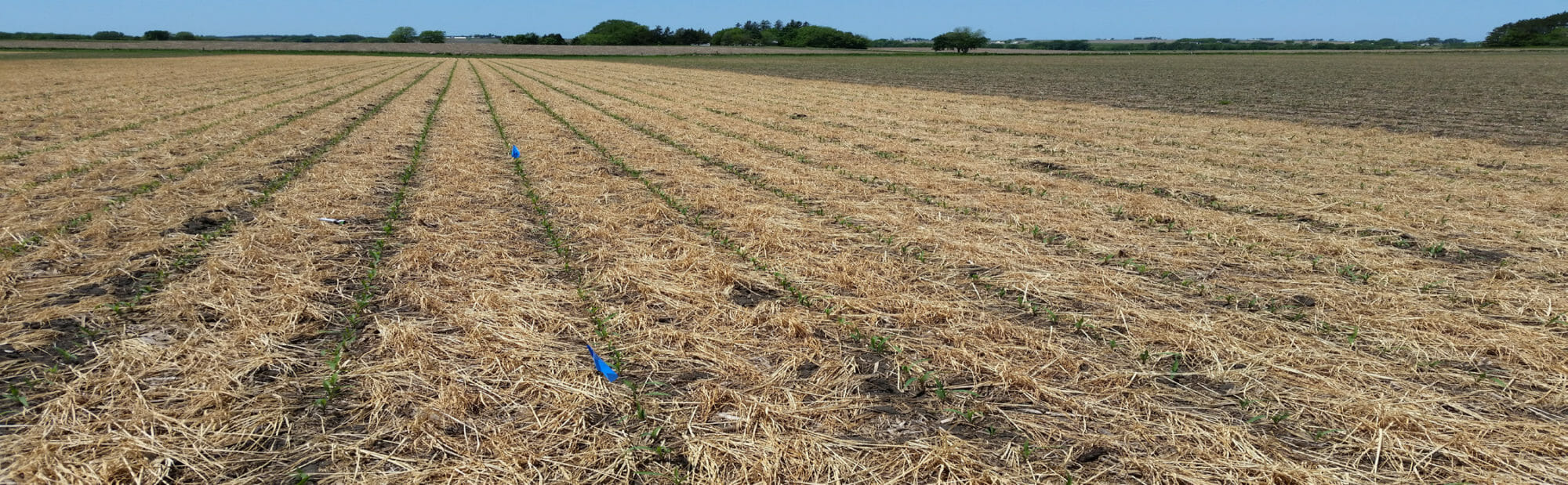 CC Term Ahead of Corn Photo 2