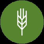 Icon SmallGrains