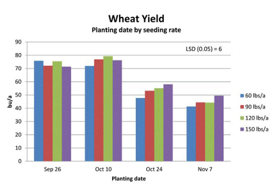 wheat yield based on planting date and seeding rate