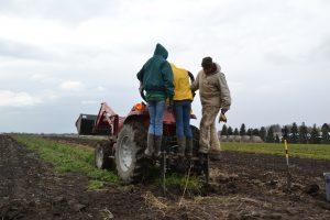 harvesting carrots from wunderbar undercutter