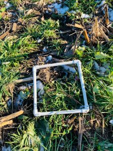 forage measurement tool for cover crops