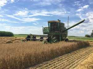 Nashua harvest oat variety trial research