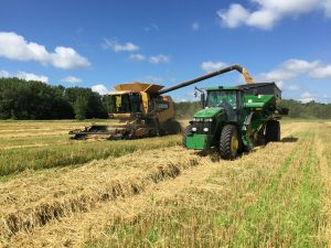 small grains harvest in July