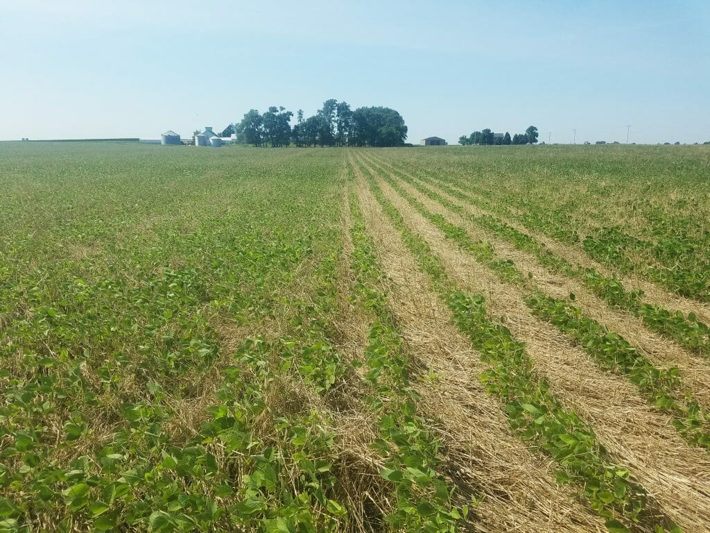 row width of soybeans cover crop termination research
