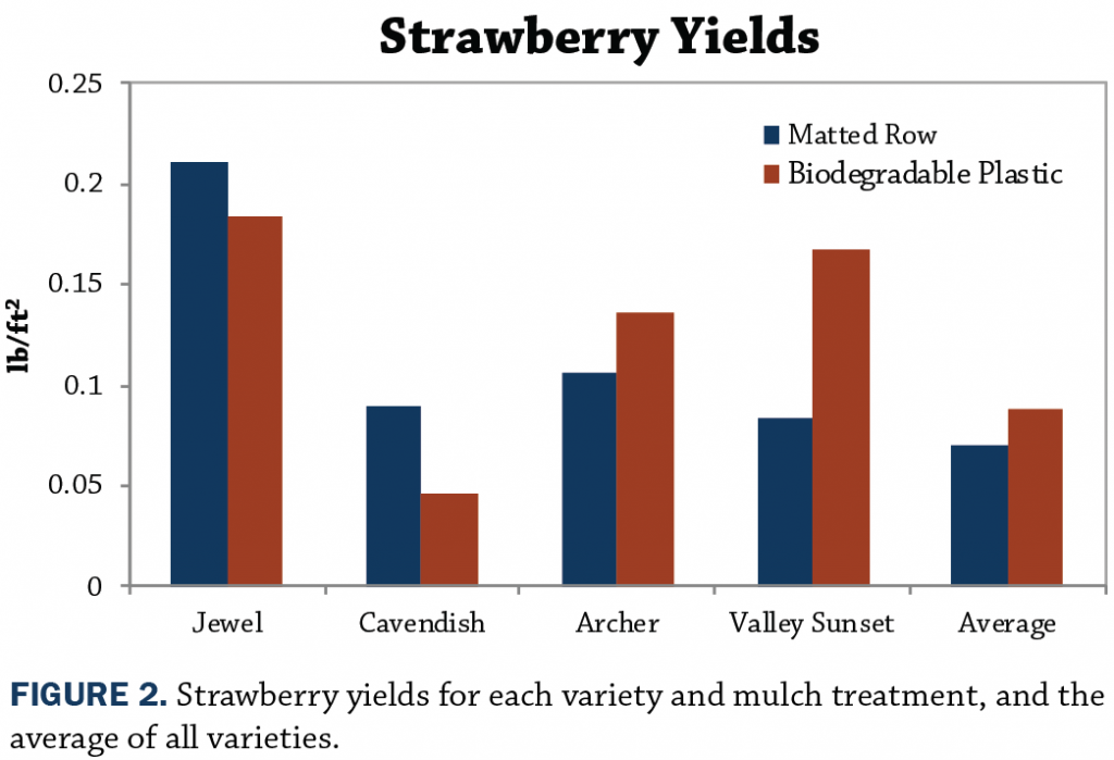 Strawberry yields in central iowa using biodegradable plastic