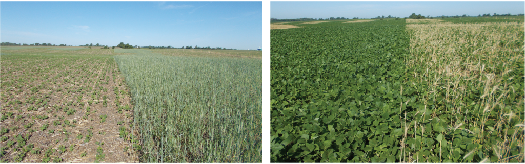 termination date research in soybeans