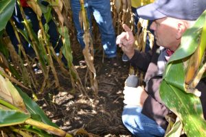 Dean Sponheim shows field day attendees cereal rye and rapeseed seedlings in standing corn.