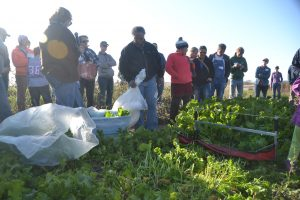 Krouse FD 2015 greens harvester filled bags
