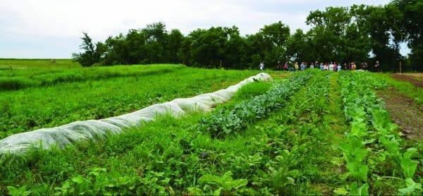 humble hands harvest vegetable beds