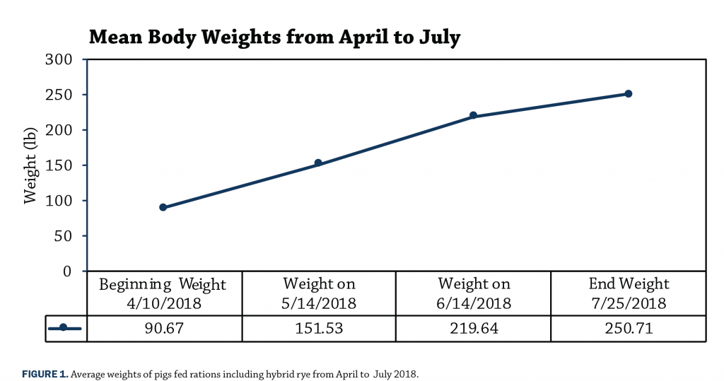 Figure 1 Mean Body Weights 2