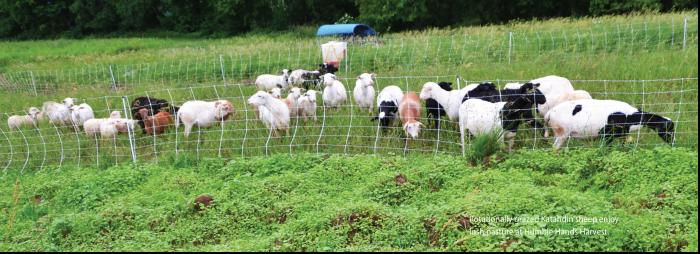 Land Access Goats