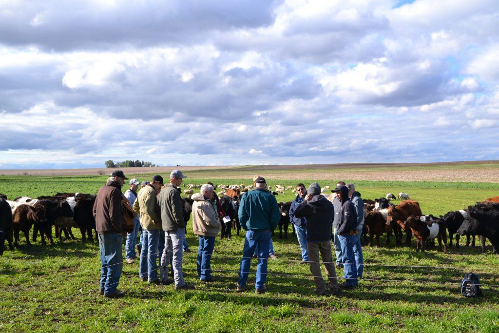 regenerative cattle grazing group farmers