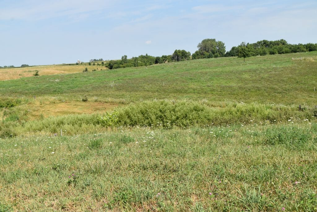 cattle pasture habitat