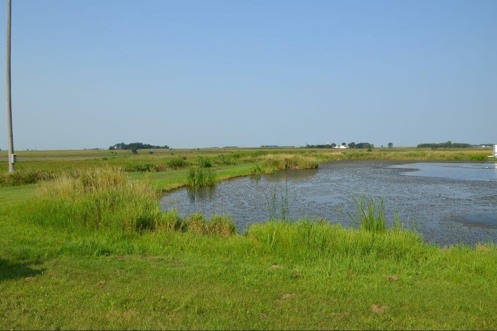 Wetland habitat