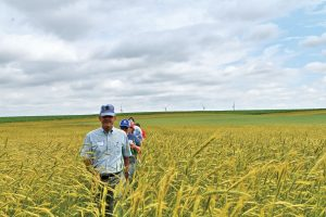 small grains field day