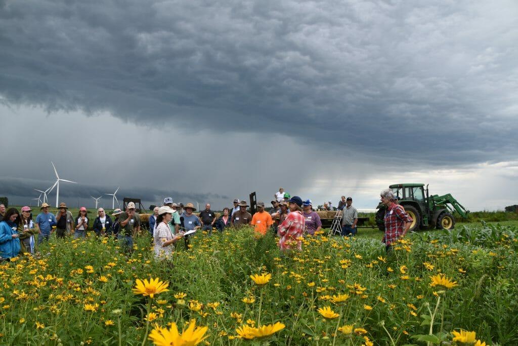 on farm prairie strip field day