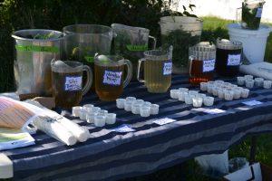 native tea tasting