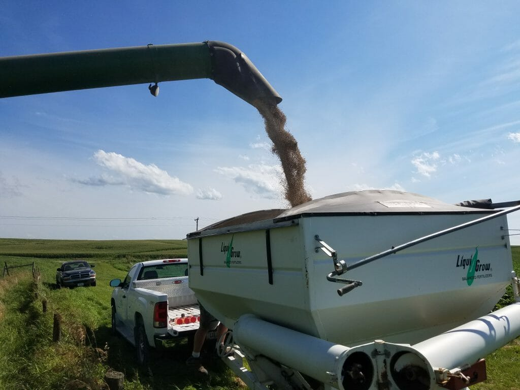 Harvesting cereal rye for seed