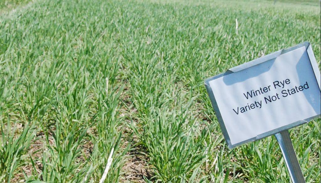 cereal rye variety trials