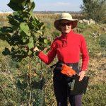 Maggie McQuown planting a sycamore Autumn 2015 e1572466764469