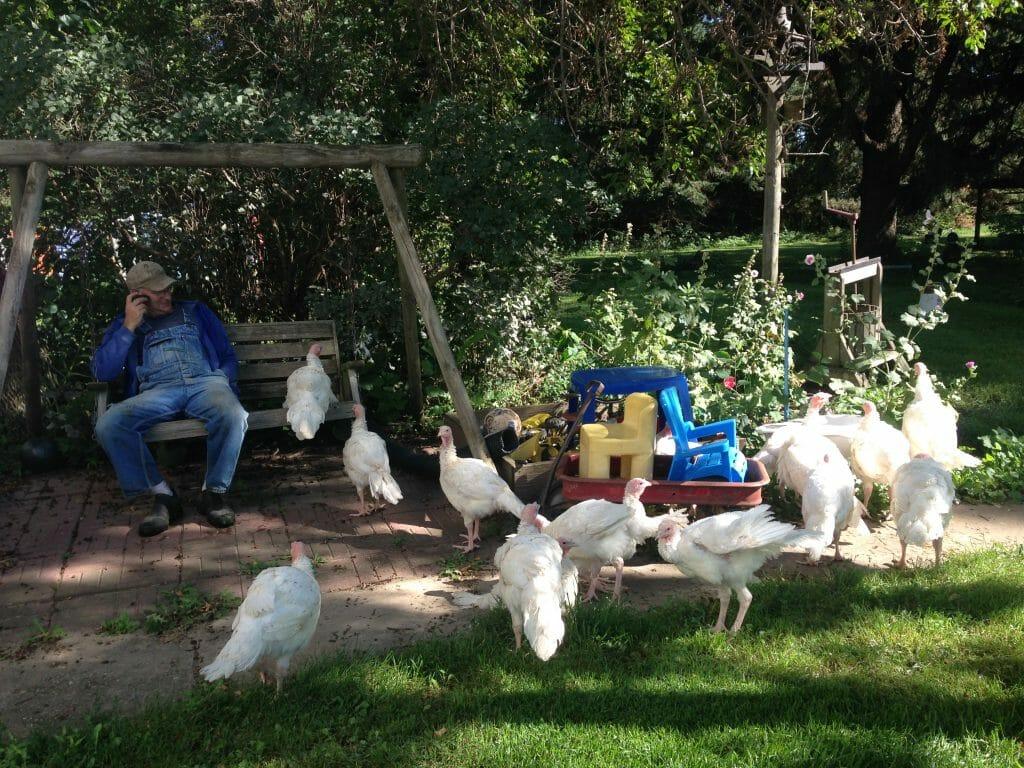 Dan Wilson sits with turkeys on his farm