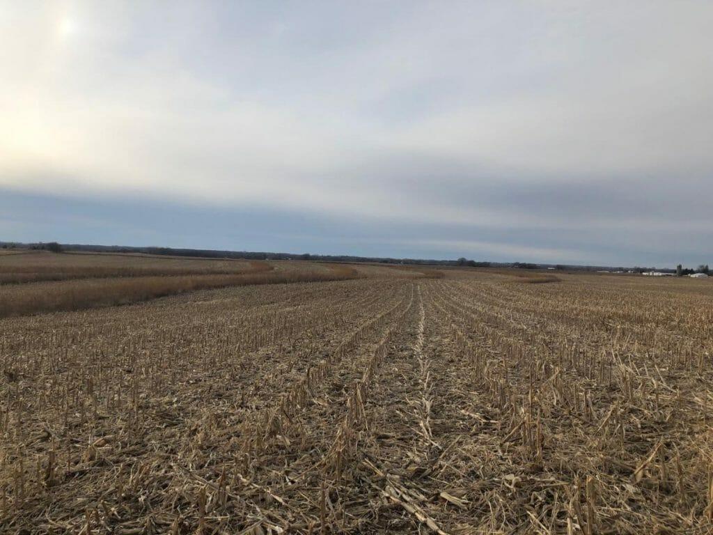 corn prairie strips