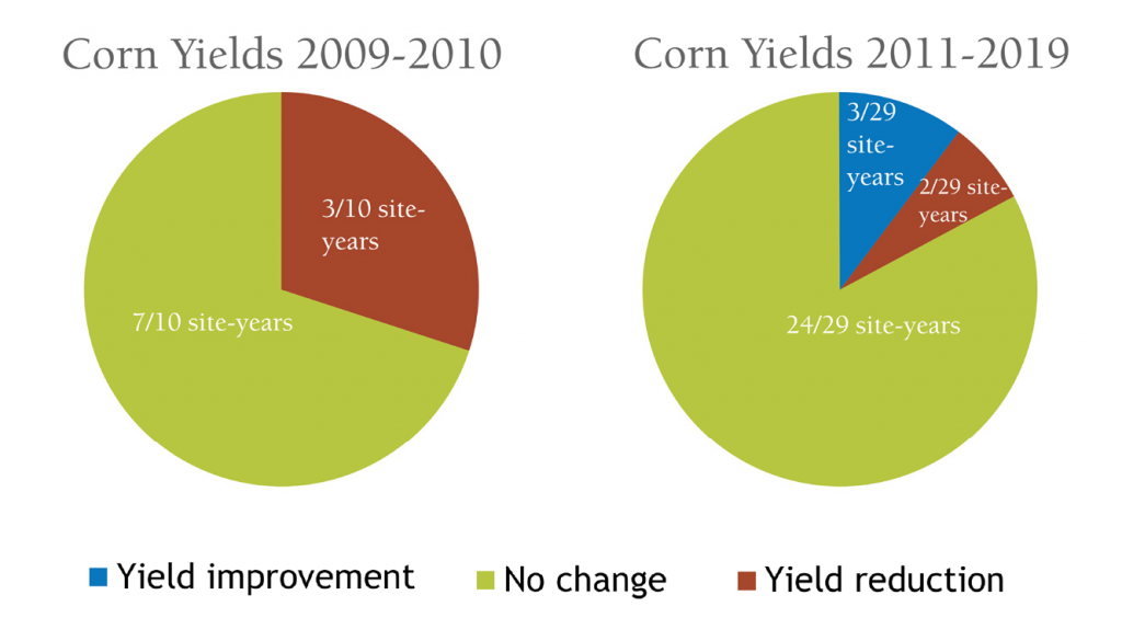 cover crop effect on corn yield