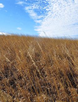 Soil Health and Income Protection Program (SHIPP)