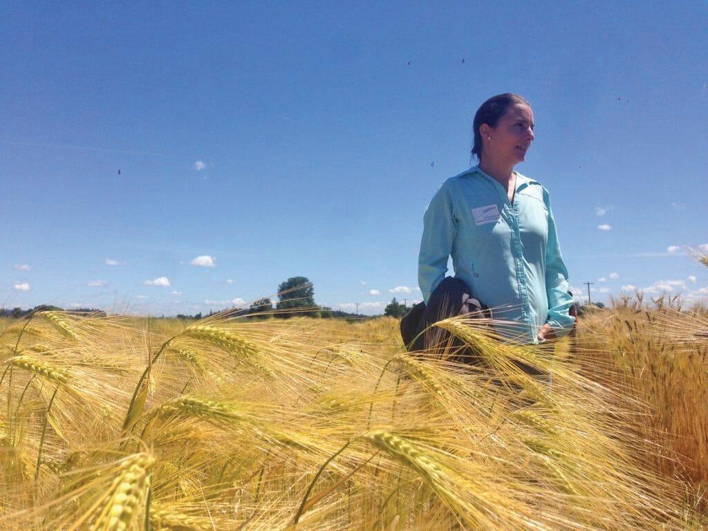farmer Gutierrez Barley field