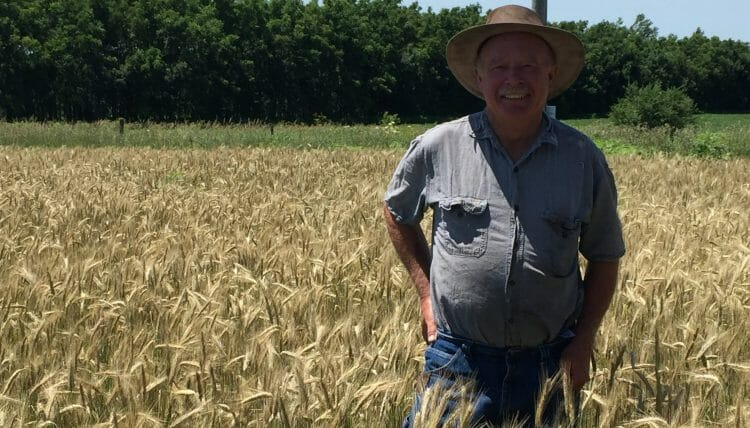 Tom Standing in a stand of hybrid rye for pig feeding