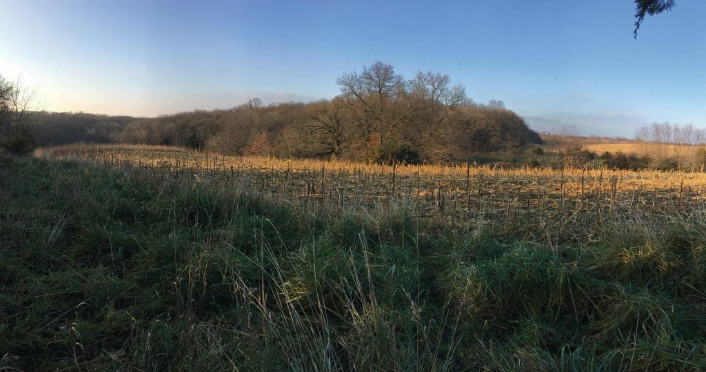 Edge of field habitat on Jim's Taylor Co Farm