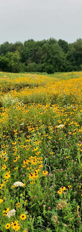 pollinator habitat on farm