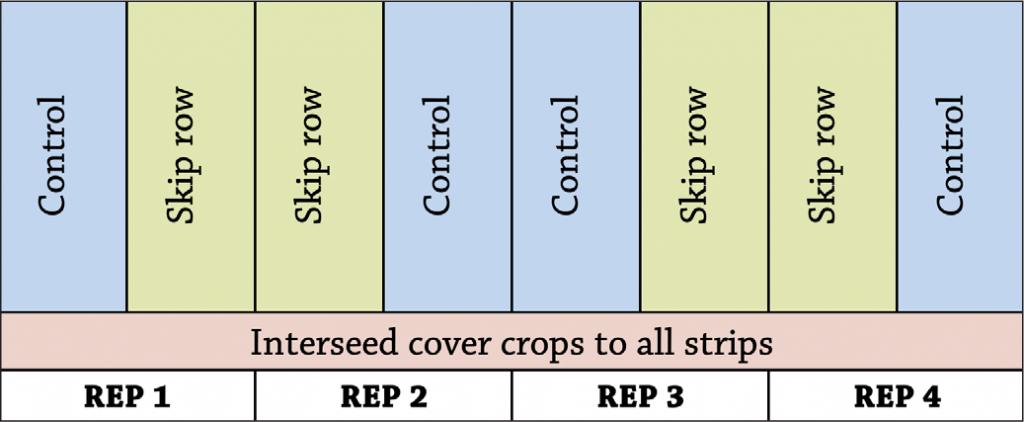 Organic corn skip rows fig a1