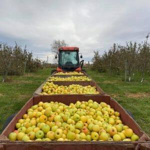 Apple harvest wilson facebook