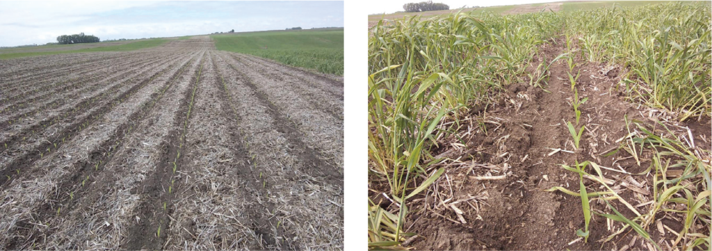 Photo effect of planting green on corn