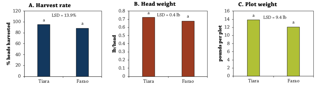 Cabbage Variety Trial Figure 2
