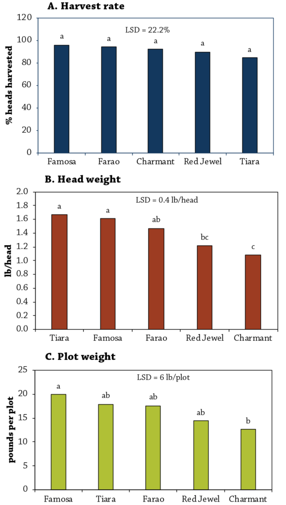 Cabbage Variety Trial Figure 3
