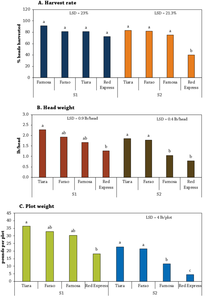 Cabbage Variety Trial Figure 4