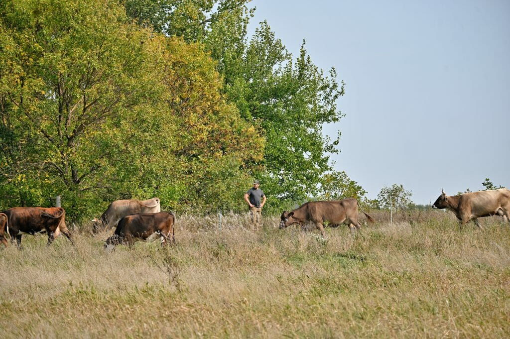 Kevin Dietzel with his cows on pasture, Sept. 25, 2020