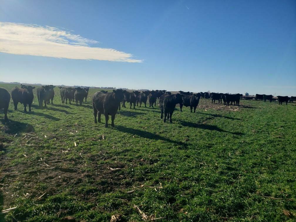 Wesley Degner December 2020 grazing