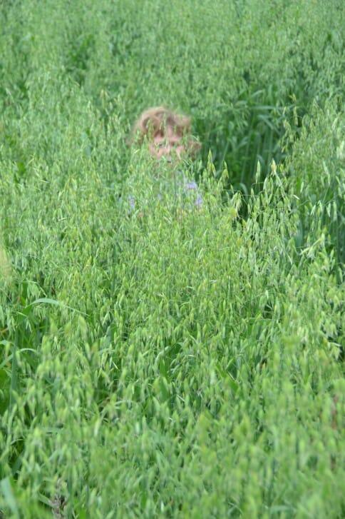 Peek-a-boo in the oats!