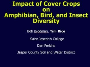 Impact of Cover Crops