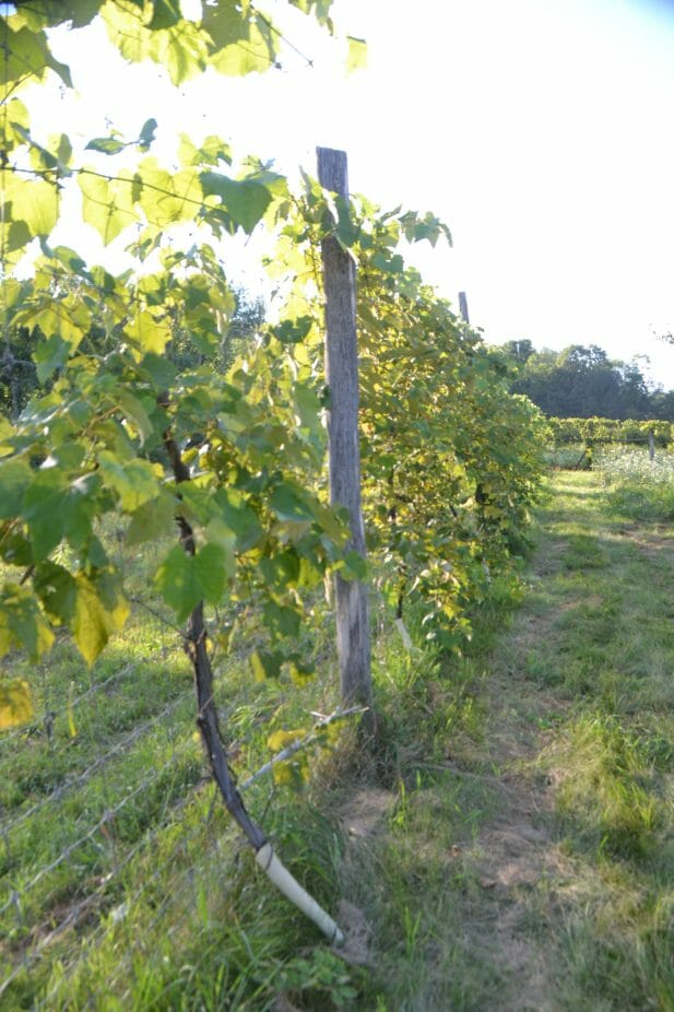 The exterior deer fence of the orchard.