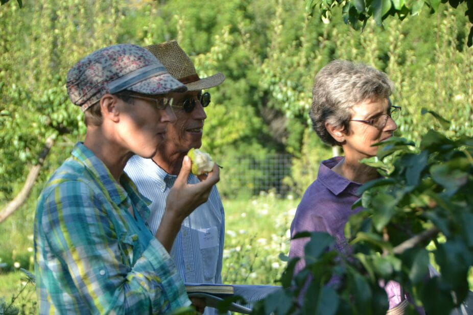 Alice McGary, and John and Angela Tedesco try the Summercrisp pears.