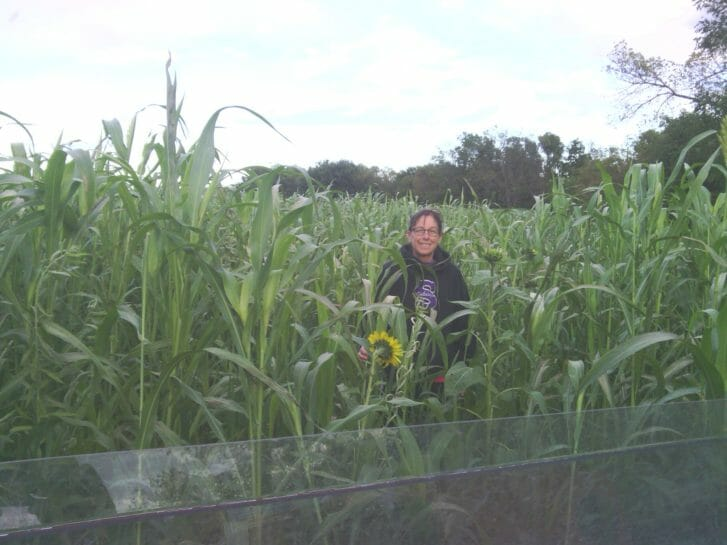 Melanie Peterson stands in a mix of sorghum sudangrass, buckwheat, cowpeas, mung beans, forage peas, oilseed radish, oats, sunflower, Sunn hemp and chickling vetch. The mix was seeded in August 2014 and this photo was taken on Oct. 6, 2014.