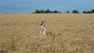 Ackley wheat field 2016